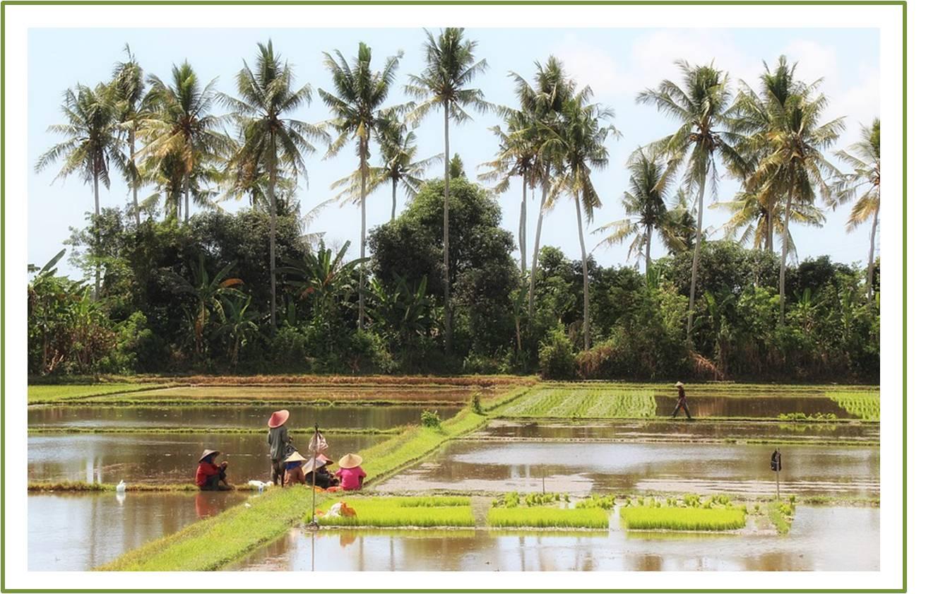 ketersediaan lahan dan air, dua nadi ketahanan pangan